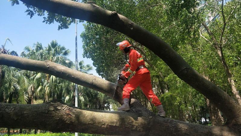 直播|台风吹倒数千棵树,福田城管奋战中