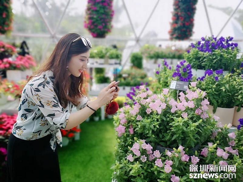 在现场|花儿都开好了——直击粤港澳大湾区2019无需申请自动送花展