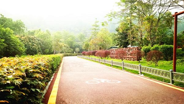 石岩湖环湖绿道,立新湖绿道……在宝安,有风景的地方就有绿道.