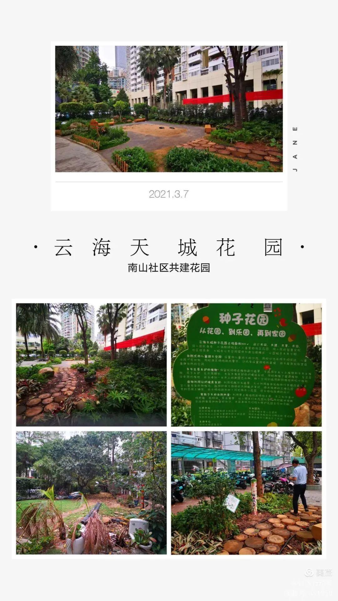 南山这个网红花园又刷屏了!社区共建花园魅力