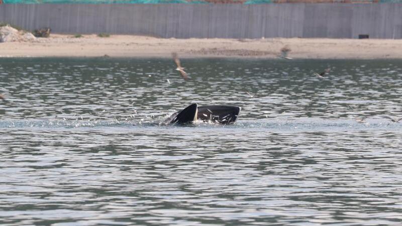 鲸鱼小布来了!多一些欢呼,再多一些保护!