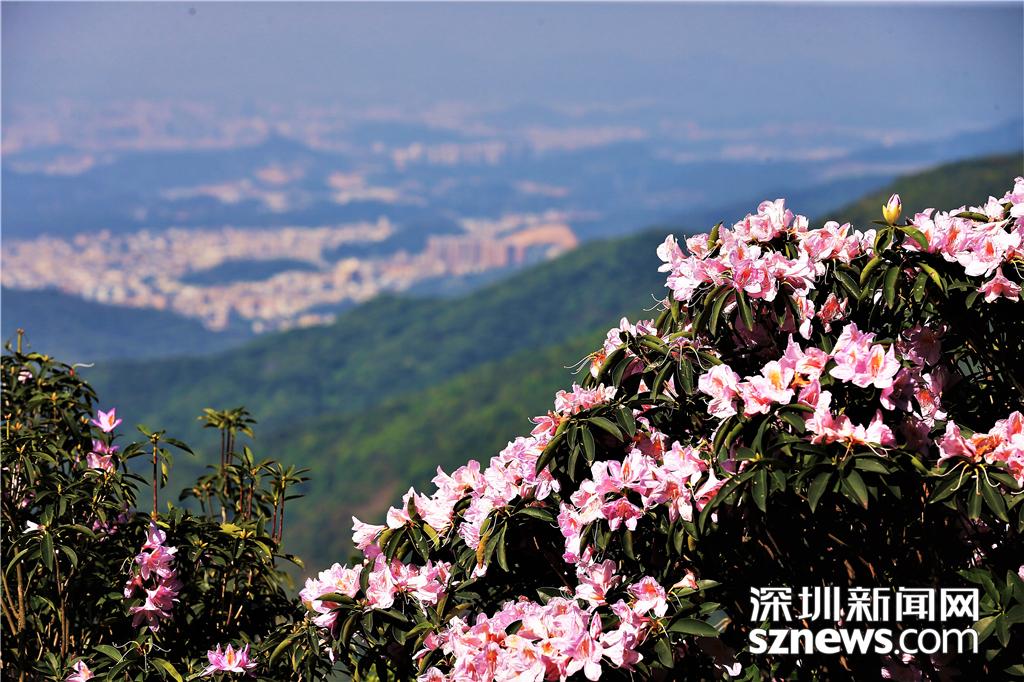 风景区管理处依据山势地形,修建了自然质朴的步道,游客们将在繁花中