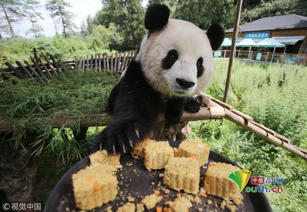 动物界过中秋欢乐百出 小动物们吃月饼萌到犯规
