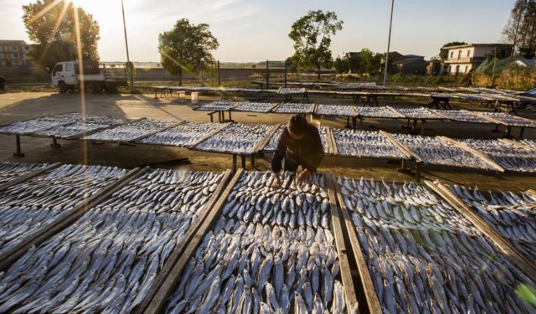 鄱阳湖畔渔民趁秋光晾鱼虾
