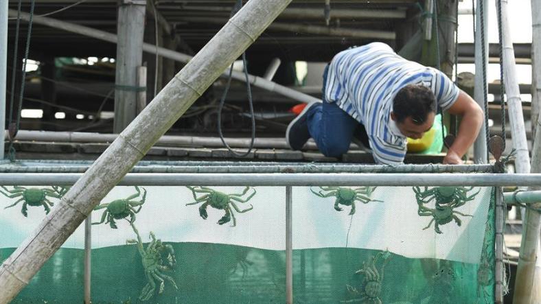 太湖蟹迎丰收季