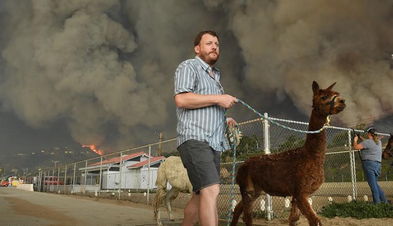美国加州山火肆虐 动物流离失所 画面令人心酸