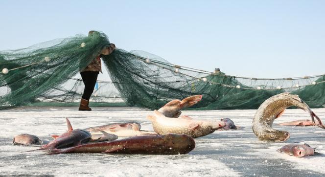 """惊艳!新疆阿勒泰传统的""""踏雪寻鱼""""展现独特捕鱼文化"""