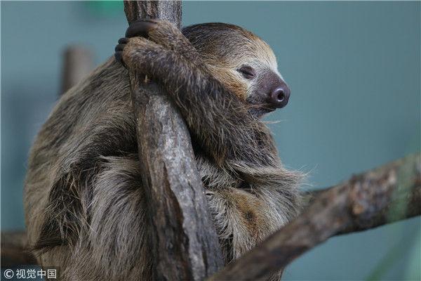 睡着也能治愈你 盘点小动物们的激萌睡姿