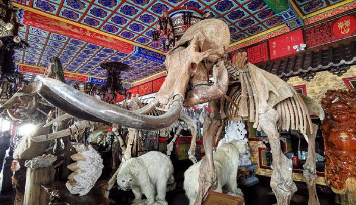 """探访黑龙江牡丹江""""毁林私建私人庄园"""" 内有亭台楼阁和多种动物标本"""