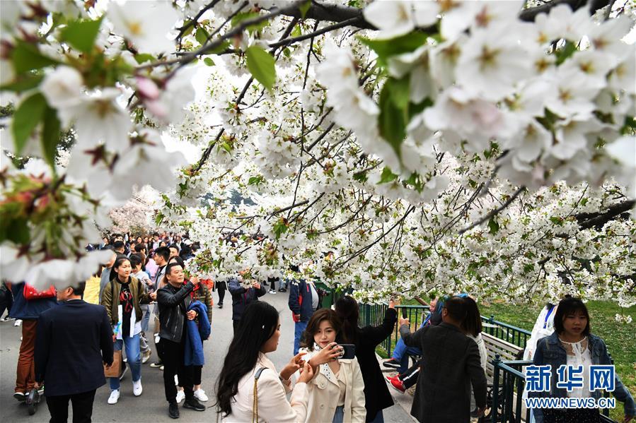 (社会)(2)赏花好时节