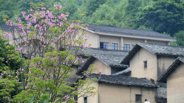 广西上林:春到乡村美如画
