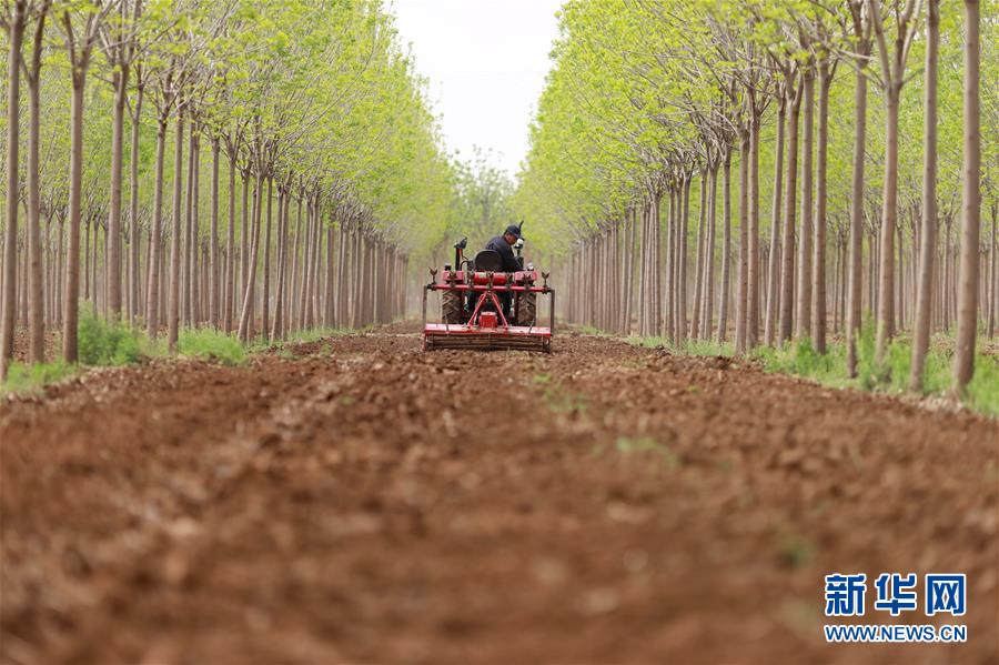 网上赚钱的办法河北内丘:药材种植富农家