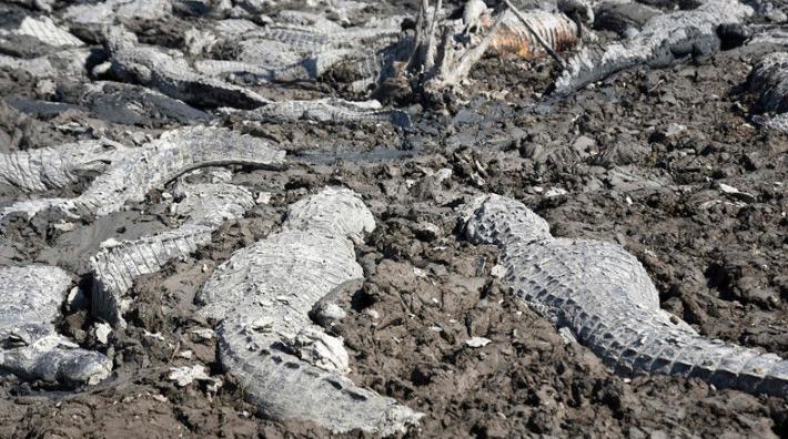 防治荒漠化和干旱日:家園何在? 盤點干旱中的動物