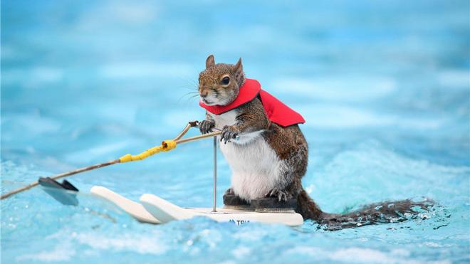 比你可爱还比你努力系列:小动物竟然会这么多绝活!