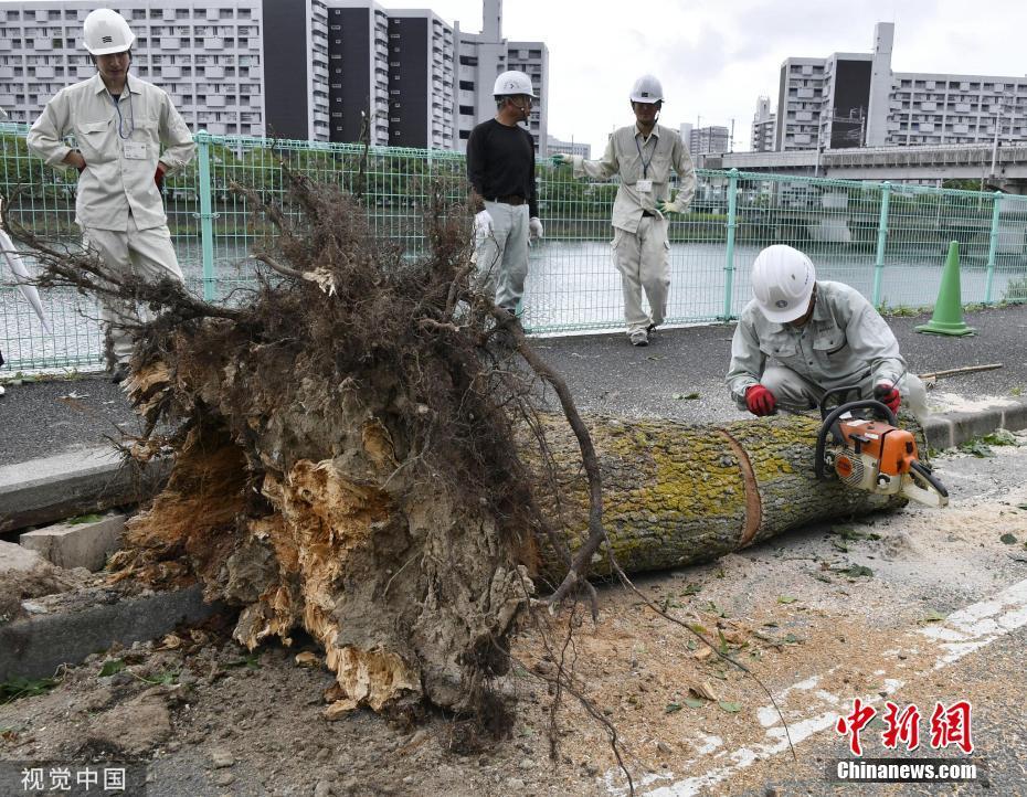 """台风""""罗莎""""登陆日本广岛"""