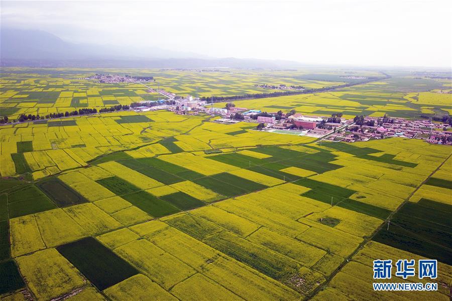 新华社记者 刘大伟 摄 广州二沙岛绿意盎然(2017年12月1日无人机拍摄)