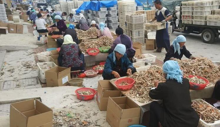 渤海湾畔海产丰收,成群鱼虾分拣后当街晾晒,场面赛晒粮食