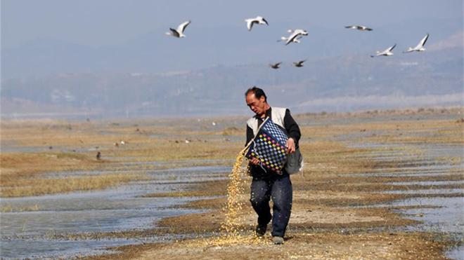 """擦亮""""高原明珠""""——贵州草海国家级自然保护区综合治理见闻"""
