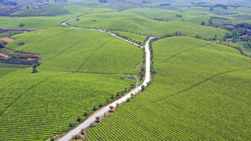 贵州湄潭:万亩茶海