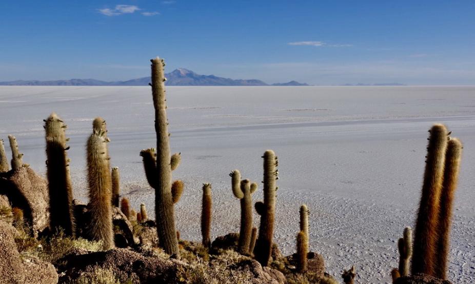 世界绝无仅有的奇观!生长在盐湖边的仙人柱 已存活了上千年