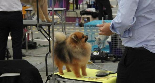 宠TA|宠物经济势头正旺  有人用超三成收入养宠