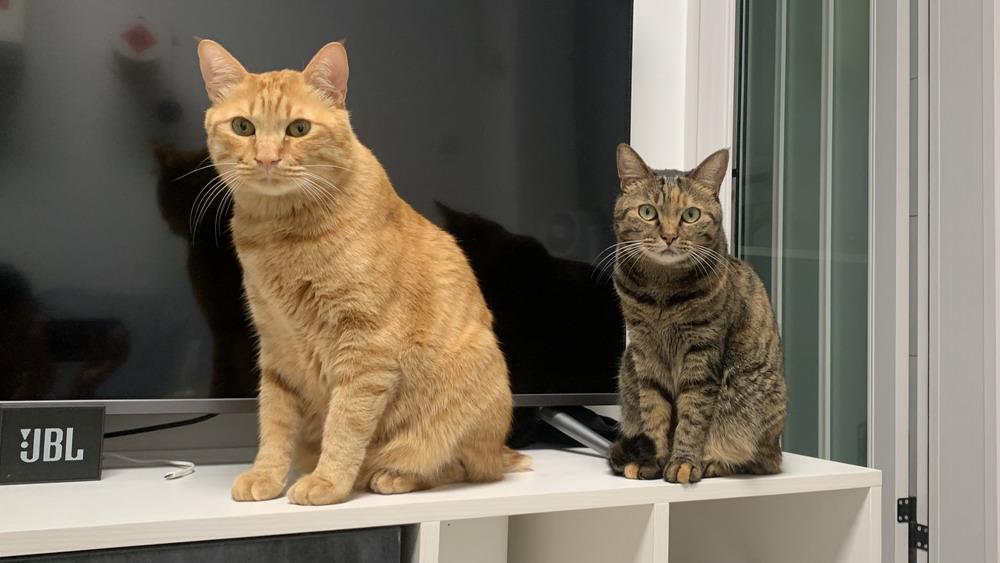 猫咪不知道自己的名字?可能是你教错啦!
