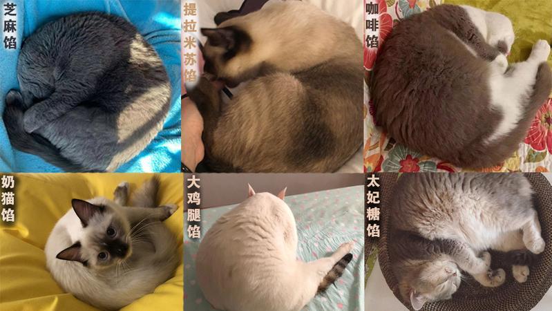 宠TA丨这些口味的猫咪汤圆 不来一口吗?