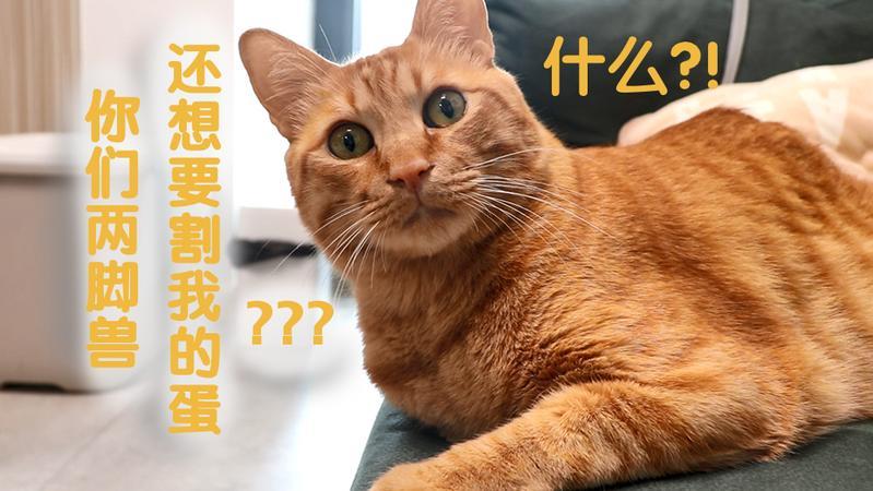 宠TA丨绝育系列①:如何说服自家猫去做绝育?