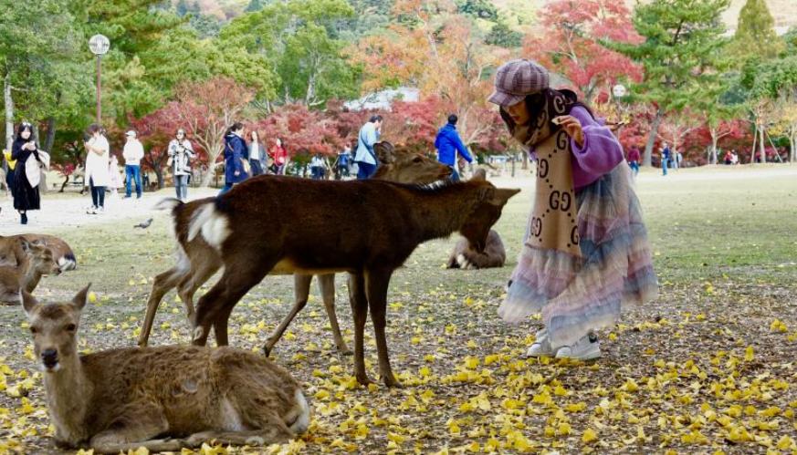 萌萌哒!深秋奈良的小鹿
