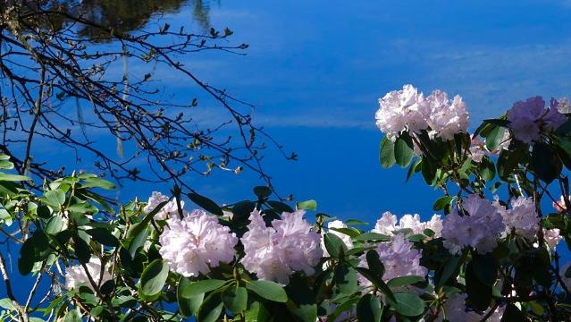 奇观天下|你绝对不知道的杜鹃花最佳观赏地区与时节!