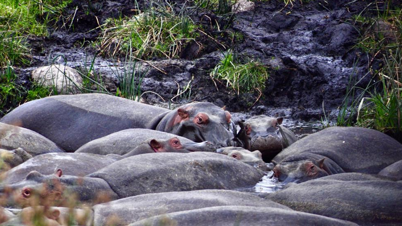 奇观天下丨地球上最完美的火山口已成为野生动物的乐园