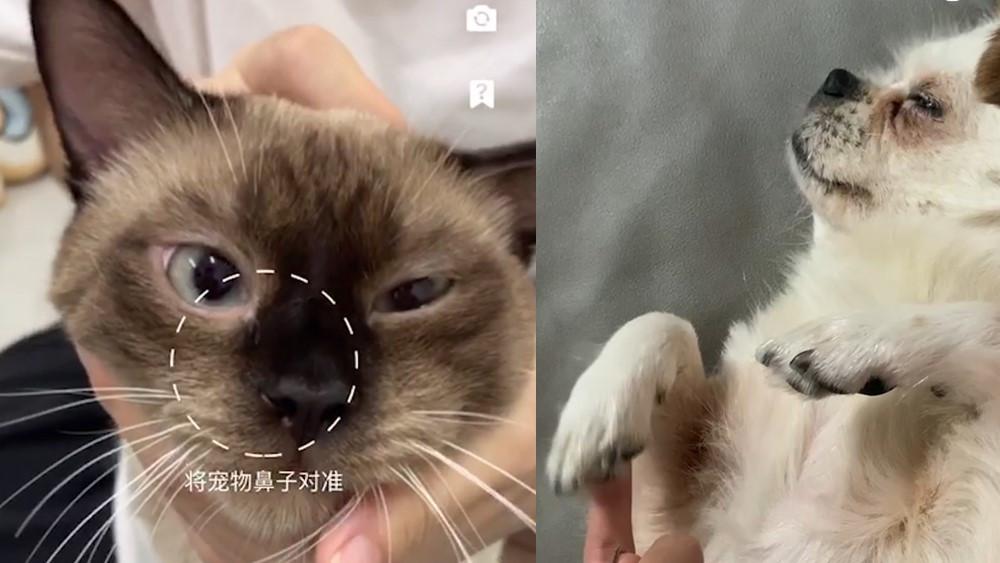 宠TA丨录鼻纹能防走失 那jiojio行不行?