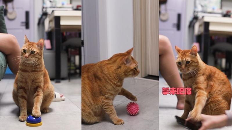 宠TA丨猫咪训练 其实亿点都不难